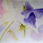 08-Sweet-pea-ink-watercolour-Julie-Wyness